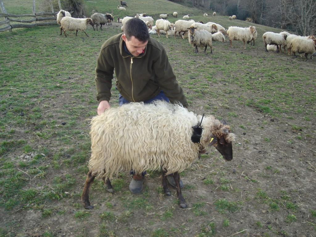 Fernando García-Dory, Bionic Sheep, 2006.